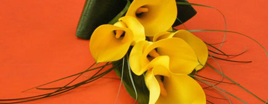 Flors Margarita