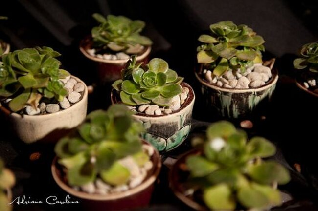 Los más hermosos centros de mesa con cactus para una boda ingeniosa - Foto: Adriana Carolina