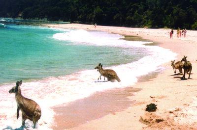 Luna di miele in inverno? La splendida estate australiana vi aspetta da dicembre a febbraio!