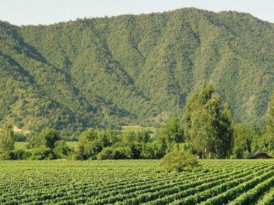 Las 10 mejores viñas para matrimonios cerca de Santiago de Chile
