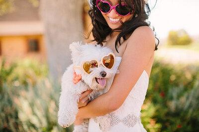 Tus mascotas, estrellas de la boda en trajes de gala
