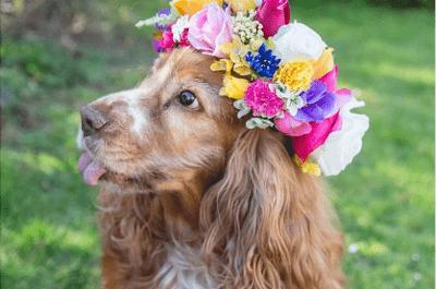 10 chiens repérés sur Instagram que l'on aimerait bien inviter à notre mariage!
