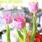 24. Tulipanes en colores vivos para ambientar la locación