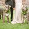 Animais de estimação no casamento