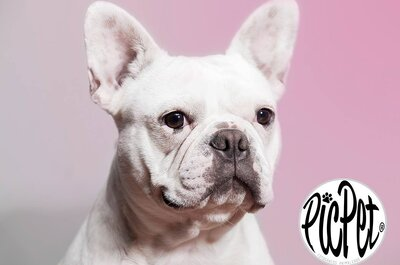 Cómo integrar a tus mascotas en el día de la boda: Entrevista a PicPet