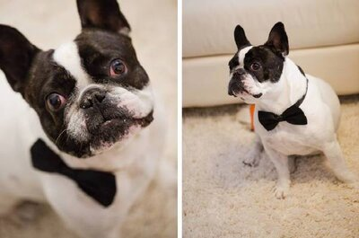 Dog Days are not over! O seu melhor amigo também tem lugar no seu casamento