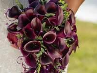 Iris Design: Diseños exclusivos para bodas en Puerto Vallarta