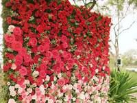 Photocall - czyli pionowy ogród
