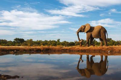 El secreto de Botswana: Vive una increíble luna de miel en un tesoro escondido de África