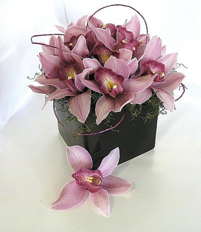Flores orquídeas. Foto de Floresta Coyoacán.