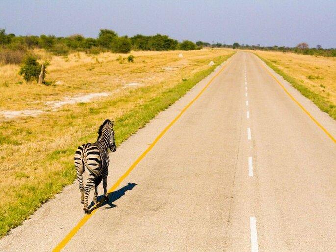 Foto: PANGEA Travel