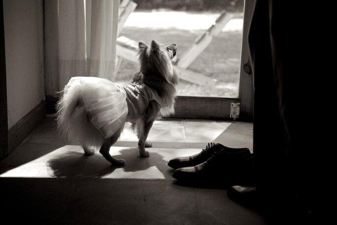 Foto: Debora Fossas