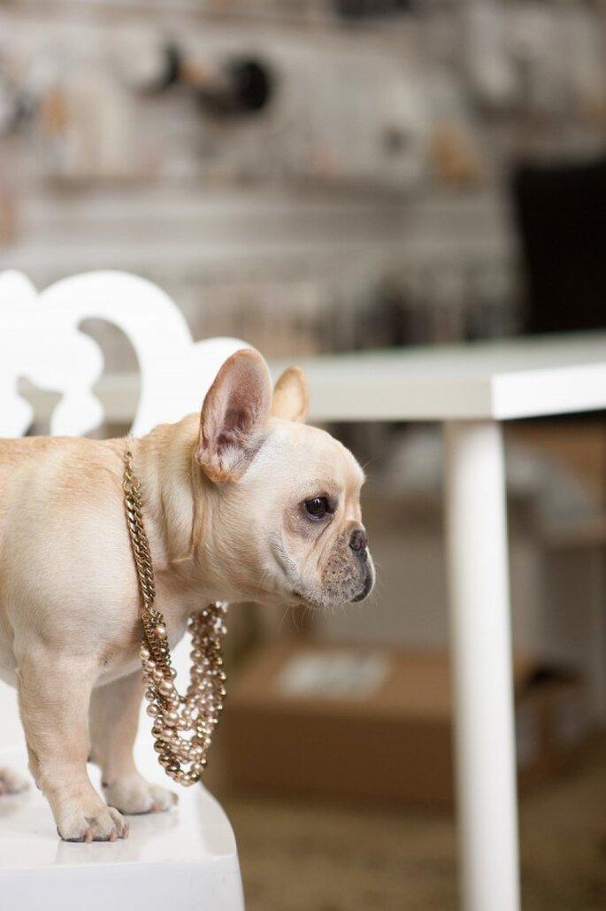6 tips para incluir a tu mascota en la boda - Lauri Levenfeld