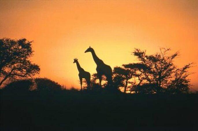 Il Sud Africa, suggestivo e magico, adatto agli sposi che progettano il viaggio di nozze in maggio.