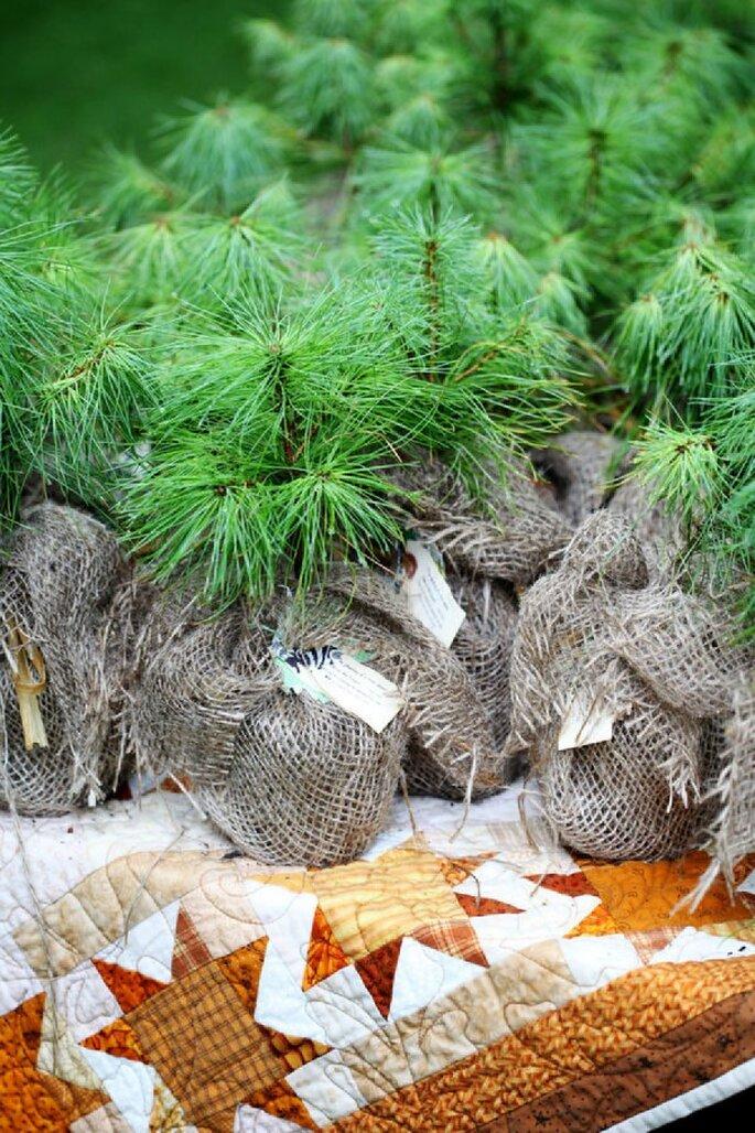 Regala a tus invitados pequeños pinos como agradecimiento - Foto Simple Photo