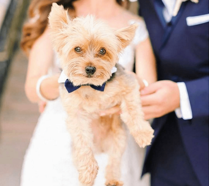 Photo : @kayenglishphotography Instagram, trouvée sur @petsatweddings Instagram