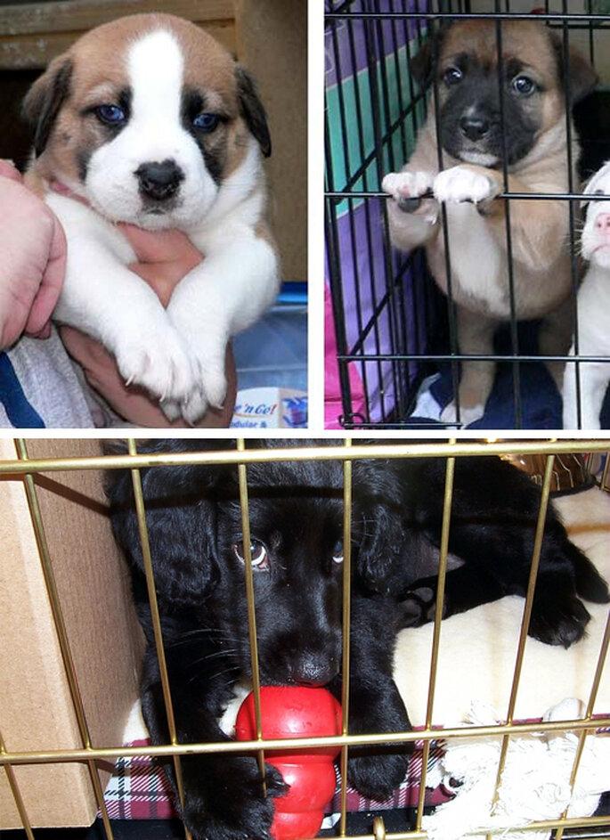 Cachorros en adopción - Foto: Basykes, Patrick Fitzgerald