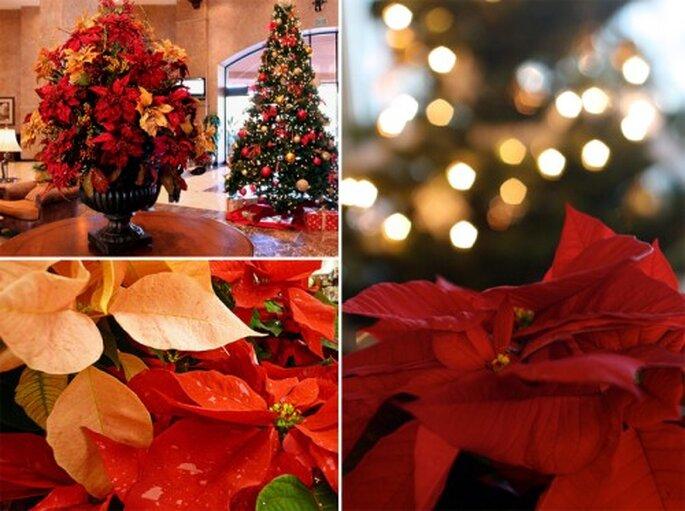 Elegantes flores de nochebuena para centros de mesa de una boda - Foto prayitno, TBoard y naotakem en Flickr