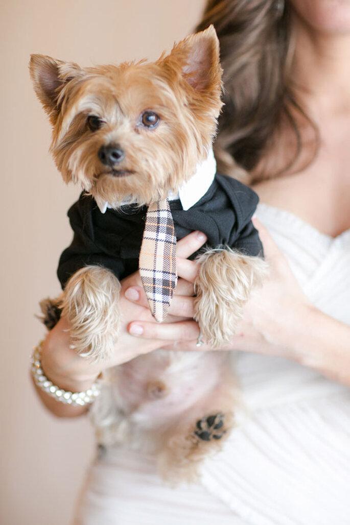 Un lindo perrito de compromiso para iniciar la nueva etapa en tu vida - Foto Elizabeth Kaye