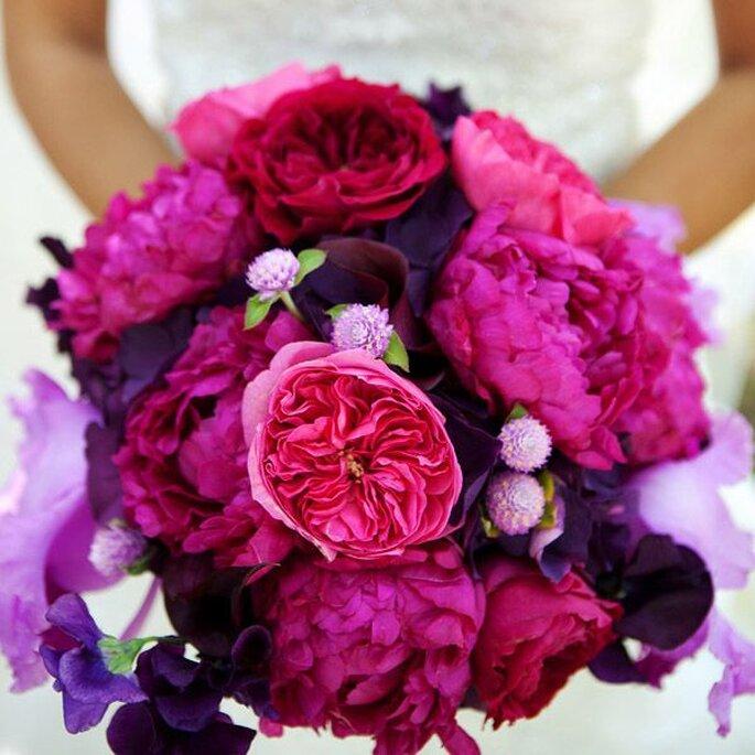 Цветы пионы самые красивые картинки - 796d8
