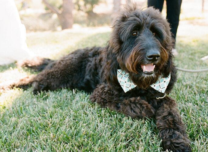 Tu mascota en tu boda - Josh Gruetzmacher Photography