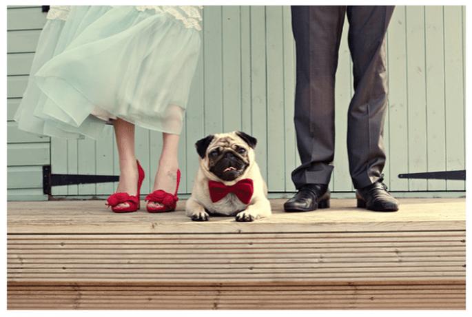 Perrito de compromiso, la nueva tendencia del 2014 - Foto Dottie Photography