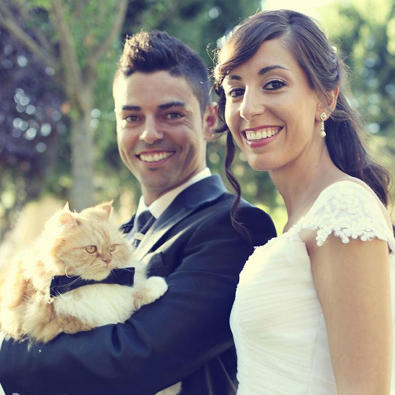 gato_www.tiempodebodas.es