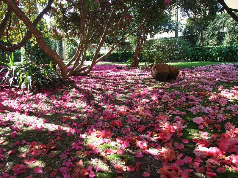 A Primavera na Quinta de Sonhos