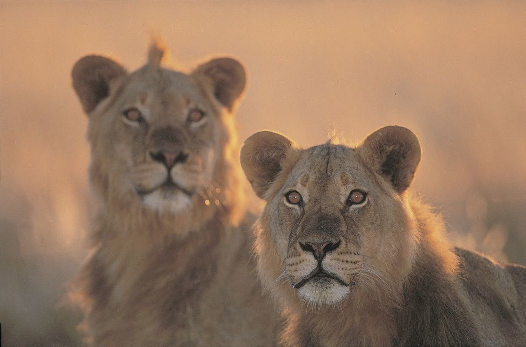 Parc national Kalahari Gemsbok, Afrique du Sud - ©Thinkstock
