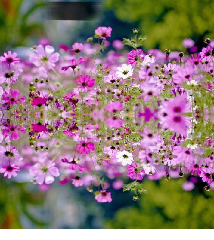 Kwiaty, kwiaty, kwiaty!
