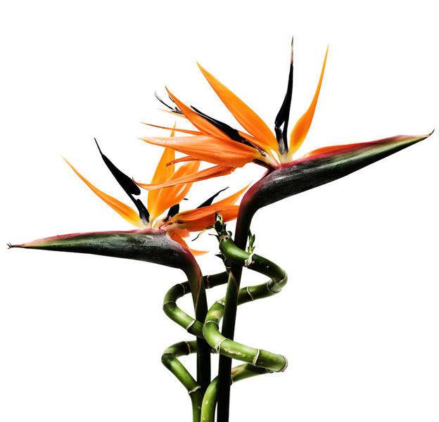 Beispiel: Florale Dekorationen, Foto: Fiori Botticelli.