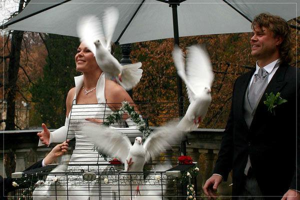 Beispiel: Wunderschöner Moment an Ihrem Hochzeitstag, Foto: Hochzeitstauben Dresden®.