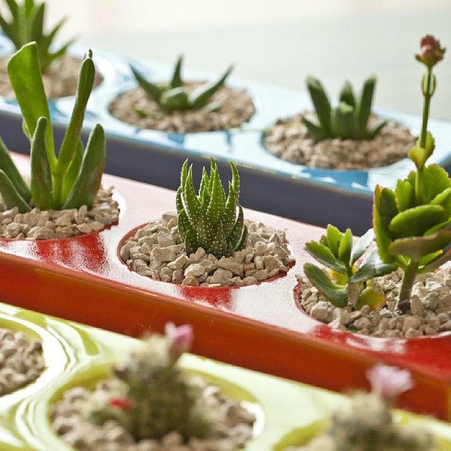 Opciones para centros de mesa en eventos especiales! Ref. CACTI * Plantas naturales * Cerámica Hecha a Mano