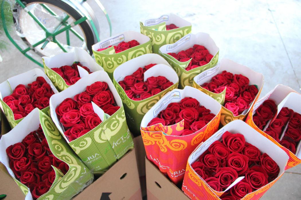 Rosas Vermelhas Importadas