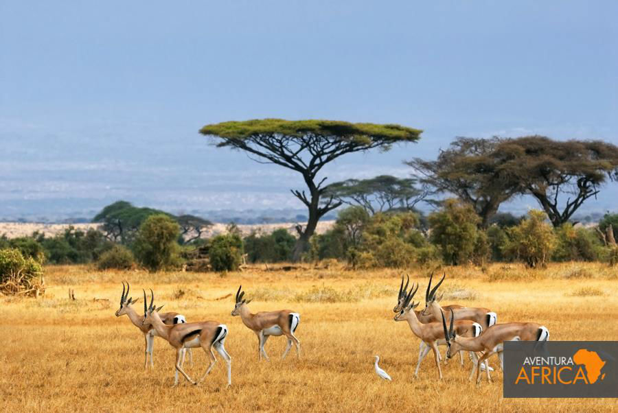 Aventura África