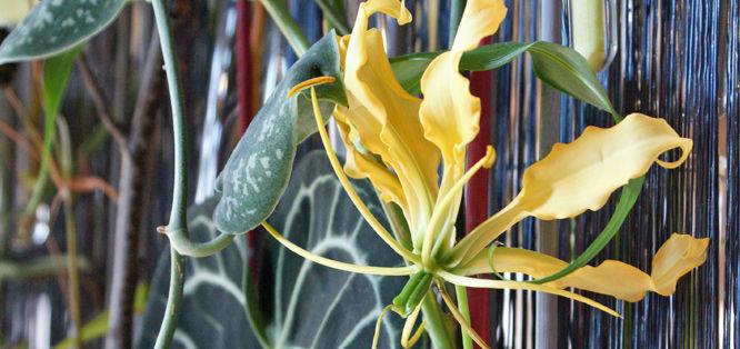 Beispiel: Blumentraum, Foto: Blumenfee Dresden.