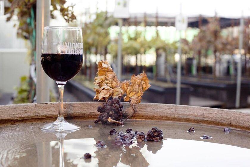 Vinícola Urbana, vinos elaborados en la terraza.