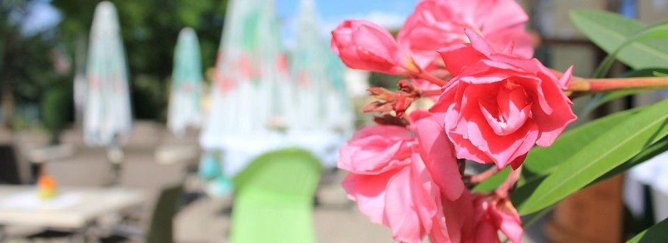 Beispiel: Flora, Foto: Restaurant Zur Tennisterrasse.