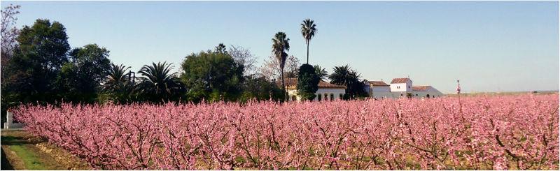 Fachada Hacienda La Vara - Floración Frutales