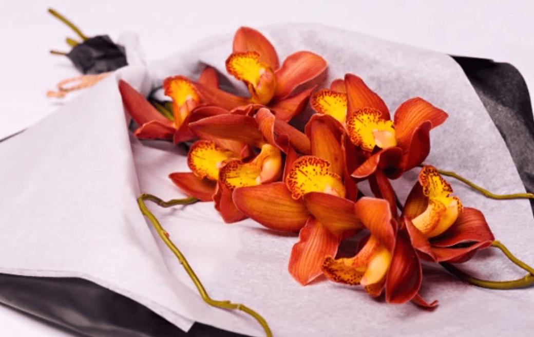 Sofía Orquídeas