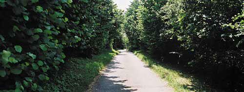 Beispiel: Anfahrtsweg, Foto: Nothenhof.