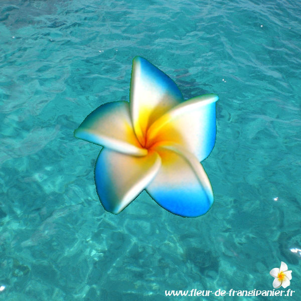 Fleur de frangipanier de 4 cm idéales pour la décoration.Nombreux coloris disponibles.