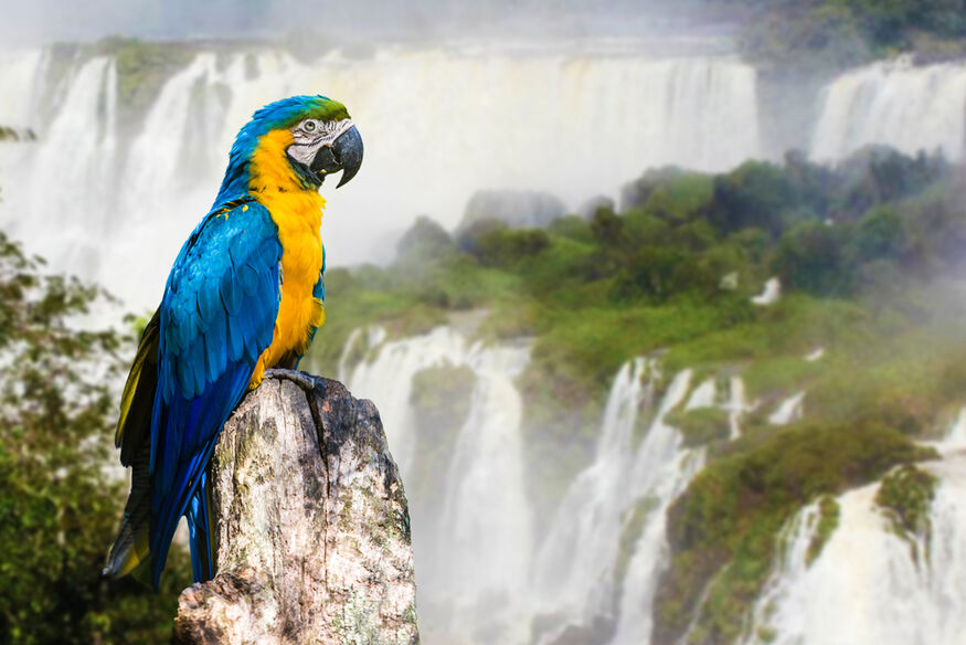 Brasile  -Cascate Iguazù -