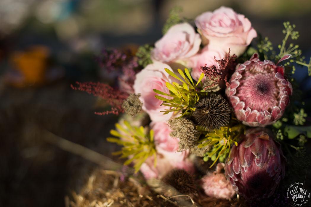 Rosa y protea