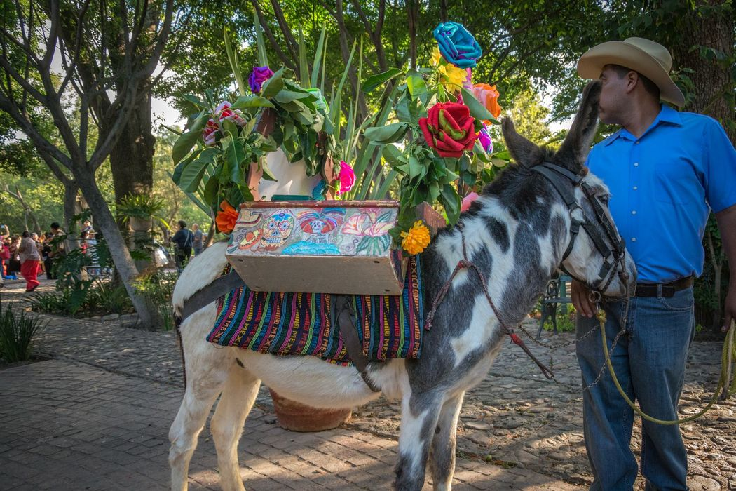 Y el burrito divino nos lleva el tequila para brindar con los invitados durante nuestro recorrido