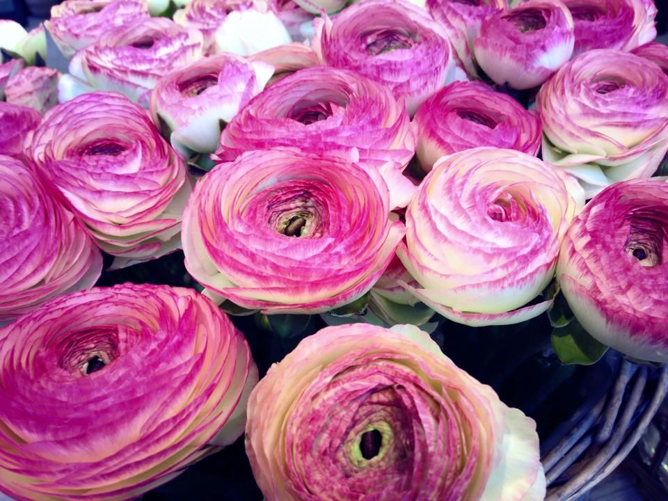 Anna Flower Designer
