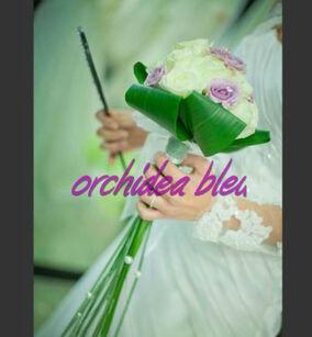 Orchidea Bleu