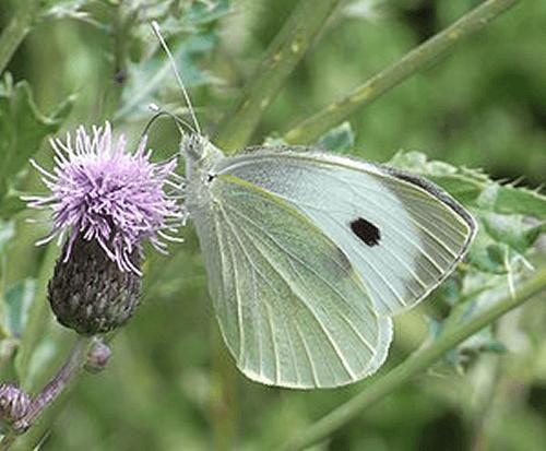 Beispiel: Schmetterlinge tragen Ihre Wünsche in den Himmel, Foto: Schmetterlingszauber.