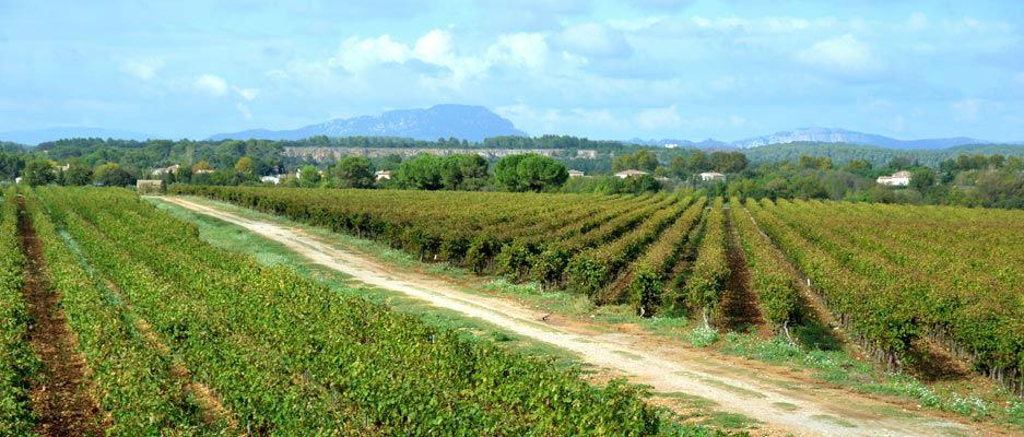 Vue sur les vignes et le Pic St Loup, près de Montpellier