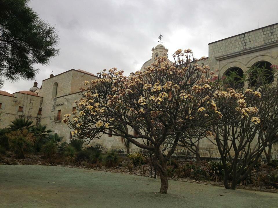 Jardín Etnobotánico, espacio para celebrar tu boda en Oaxaca.